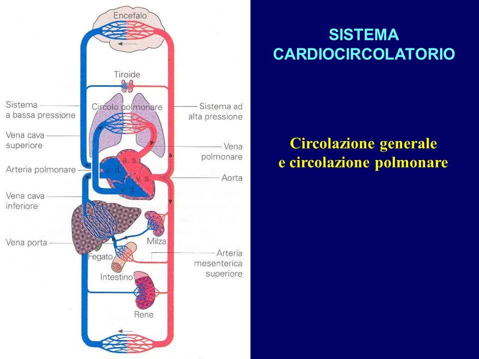 Circolazione generale e circolazione polmonare SISTEMA CARDIOCIRCOLATORIO