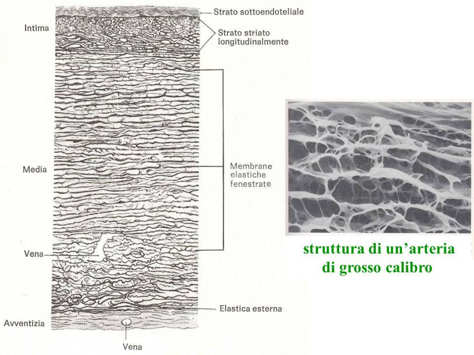 anastomosi arterio-venose rete mirabile arteriosa