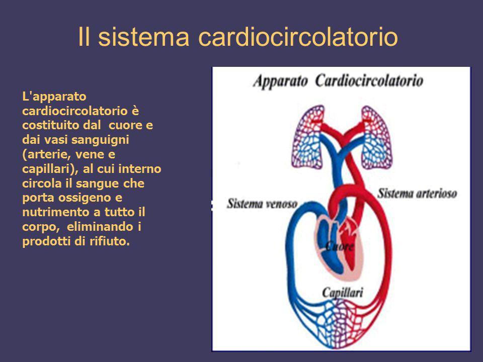 Il sistema cardiocircolatorio L'apparato cardiocircolatorio è costituito dal cuore e dai vasi sanguigni (arterie, vene e capillari), al cui interno ci