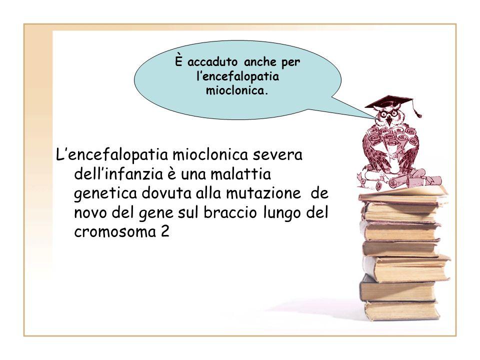 Lencefalopatia mioclonica severa dellinfanzia è una malattia genetica dovuta alla mutazione de novo del gene sul braccio lungo del cromosoma 2 È accad