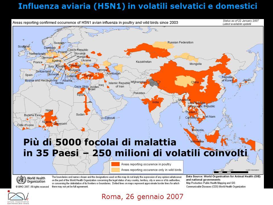 Influenza aviaria (H5N1) in volatili selvatici e domestici Roma, 26 gennaio 2007 Più di 5000 focolai di malattia in 35 Paesi – 250 milioni di volatili