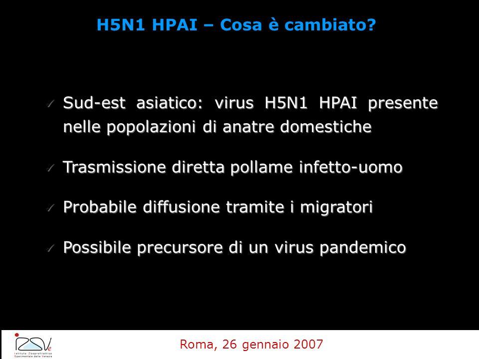 Sud-est asiatico: virus H5N1 HPAI presente nelle popolazioni di anatre domestiche Sud-est asiatico: virus H5N1 HPAI presente nelle popolazioni di anat
