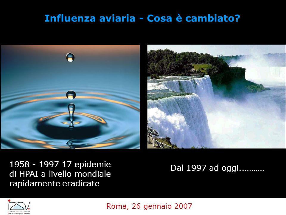 Roma, 26 gennaio 2007 Influenza aviaria - Cosa è cambiato? 1958 - 1997 17 epidemie di HPAI a livello mondiale rapidamente eradicate Dal 1997 ad oggi..
