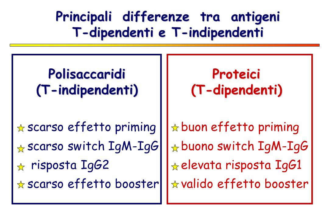 Principali differenze tra antigeni T-dipendenti e T-indipendenti Polisaccaridi(T-indipendenti) scarso effetto priming scarso switch IgM-IgG risposta I