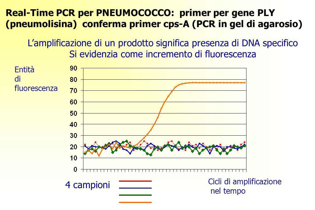 Real-Time PCR per PNEUMOCOCCO: primer per gene PLY (pneumolisina) conferma primer cps-A (PCR in gel di agarosio) 4 campioni Entità di fluorescenza Cicli di amplificazione nel tempo Lamplificazione di un prodotto significa presenza di DNA specifico Si evidenzia come incremento di fluorescenza