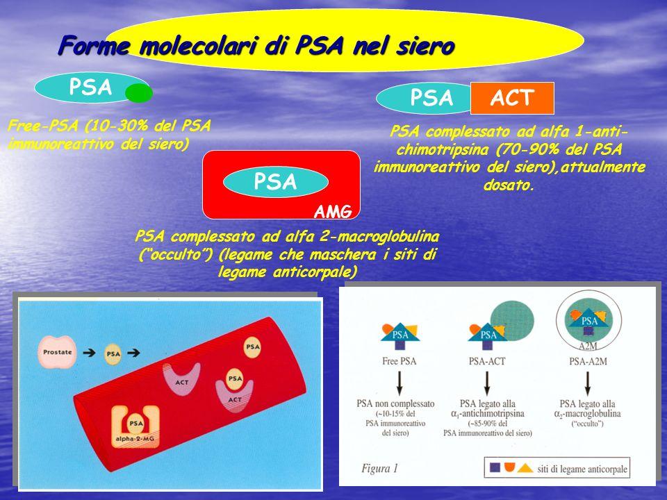 Forme molecolari di PSA nel siero Free-PSA (10-30% del PSA immunoreattivo del siero) PSAACT PSA complessato ad alfa 1-anti- chimotripsina (70-90% del