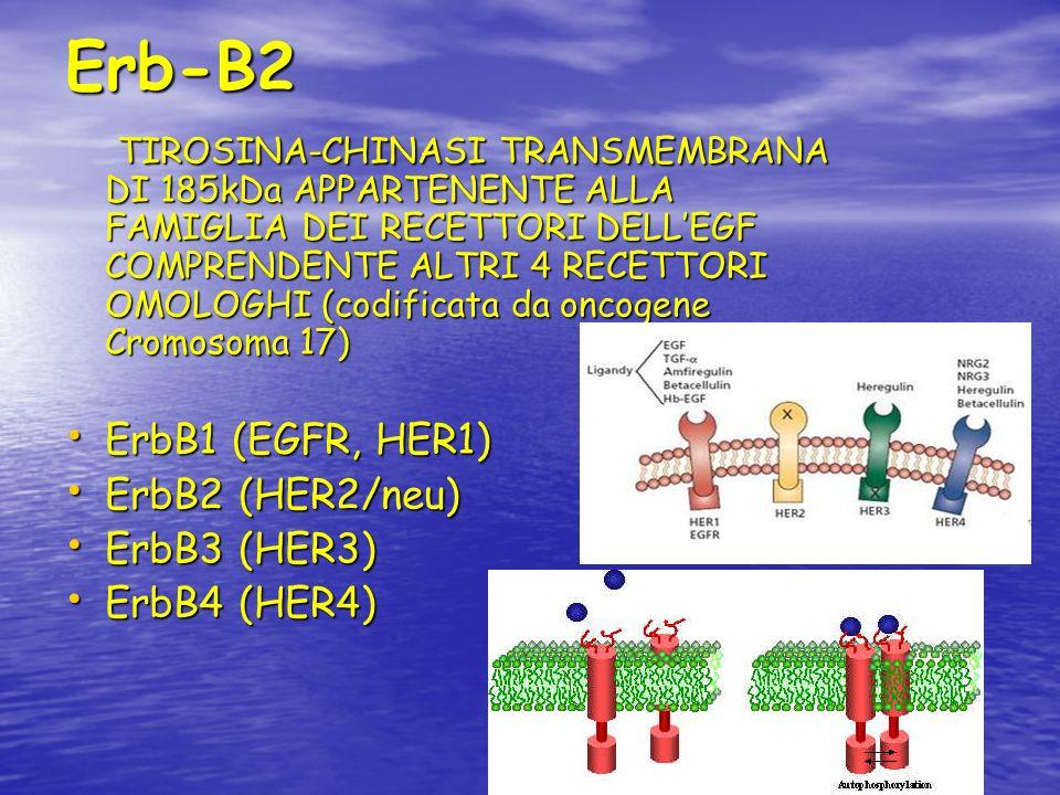 Erb-B2 TIROSINA-CHINASI TRANSMEMBRANA DI 185kDa APPARTENENTE ALLA FAMIGLIA DEI RECETTORI DELLEGF COMPRENDENTE ALTRI 4 RECETTORI OMOLOGHI (codificata d