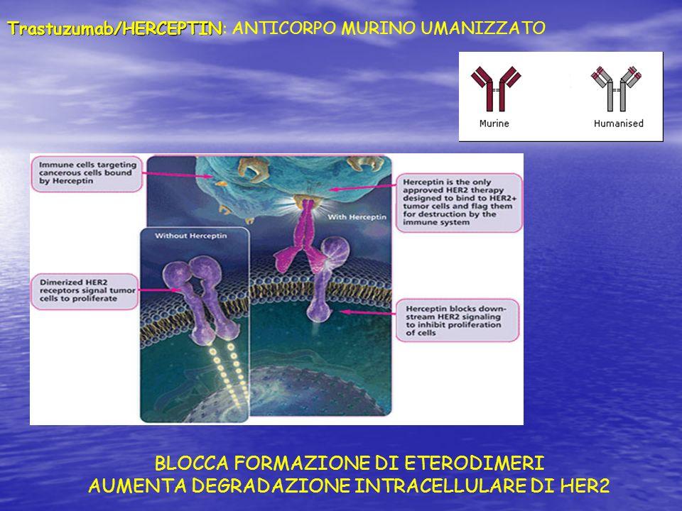 BLOCCA FORMAZIONE DI ETERODIMERI AUMENTA DEGRADAZIONE INTRACELLULARE DI HER2 Trastuzumab/HERCEPTIN Trastuzumab/HERCEPTIN: ANTICORPO MURINO UMANIZZATO