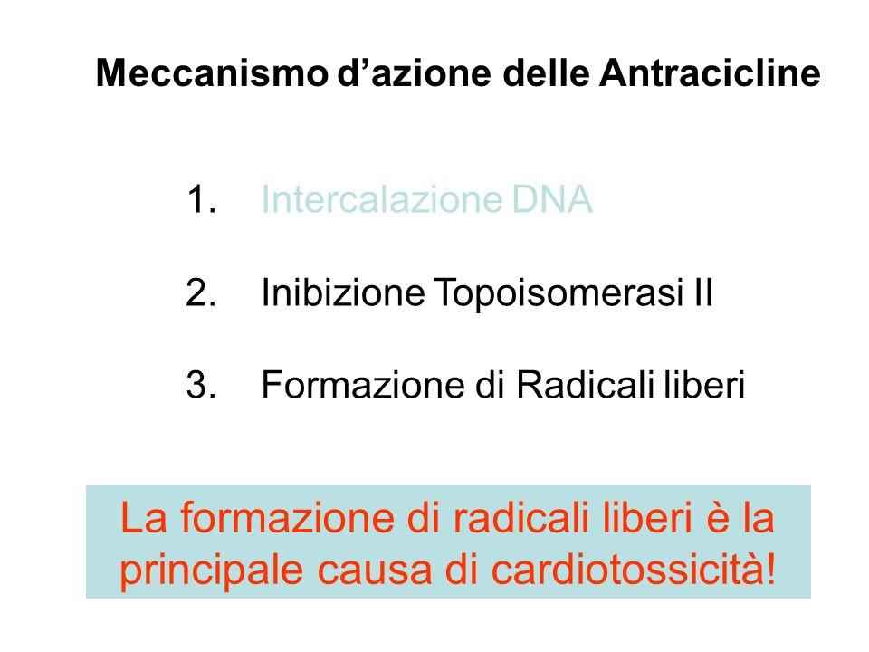 Meccanismo dazione delle Antracicline 1. Intercalazione DNA 2. Inibizione Topoisomerasi II 3. Formazione di Radicali liberi La formazione di radicali
