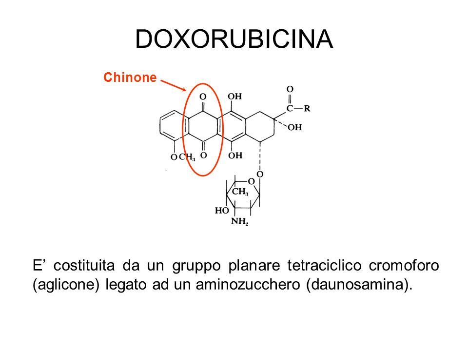 DOXORUBICINA E costituita da un gruppo planare tetraciclico cromoforo (aglicone) legato ad un aminozucchero (daunosamina). Chinone