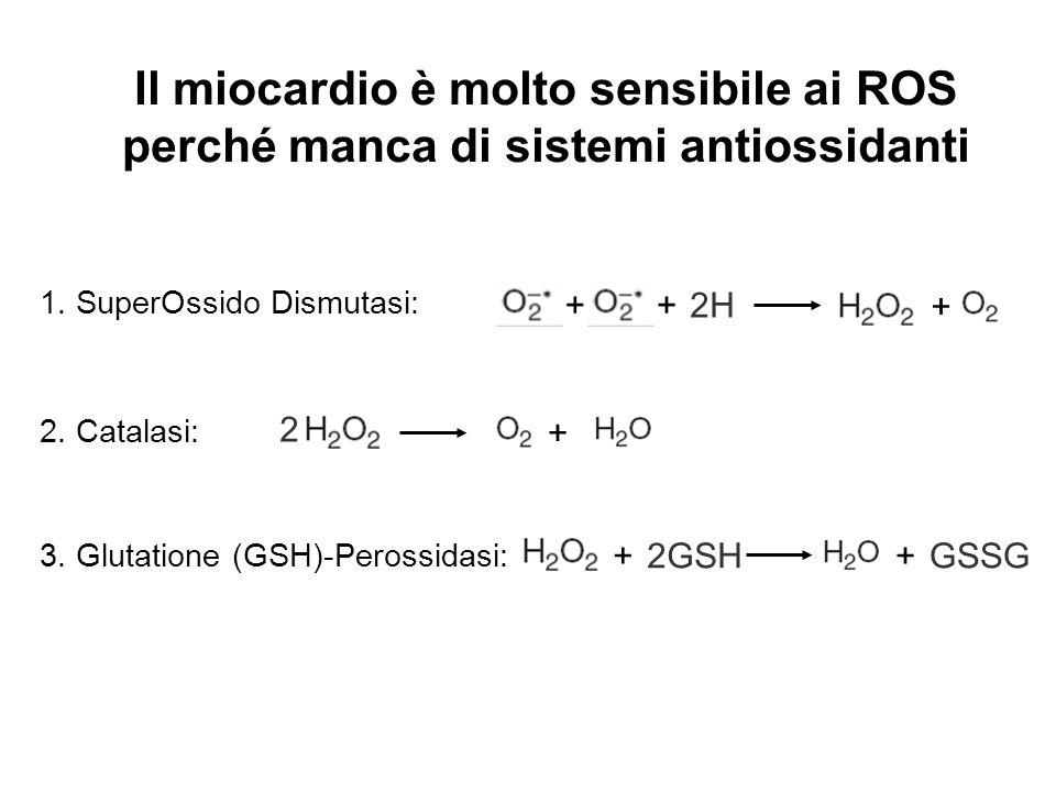 Il miocardio è molto sensibile ai ROS perché manca di sistemi antiossidanti 2. Catalasi: + 2 ++2H + 1. SuperOssido Dismutasi: 3. Glutatione (GSH)-Pero