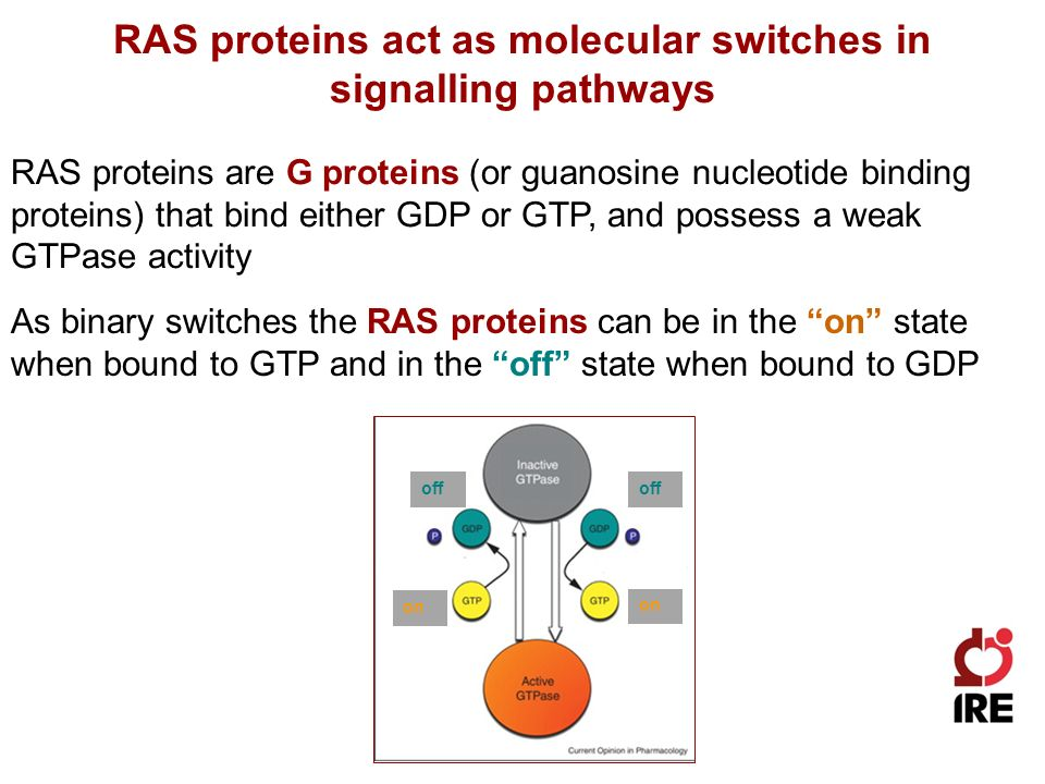 RAS proteins are G proteins (or guanosine nucleotide binding proteins) that bind either GDP or GTP, and possess a weak GTPase activity RAS proteins act as molecular switches in signalling pathways As binary switches the RAS proteins can be in the on state when bound to GTP and in the off state when bound to GDP on off