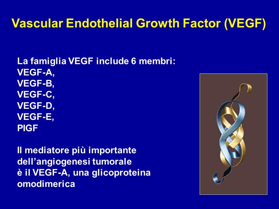 Vascular Endothelial Growth Factor (VEGF) La famiglia VEGF include 6 membri: VEGF-A, VEGF-B, VEGF-C, VEGF-D, VEGF-E, PIGF Il mediatore più importante