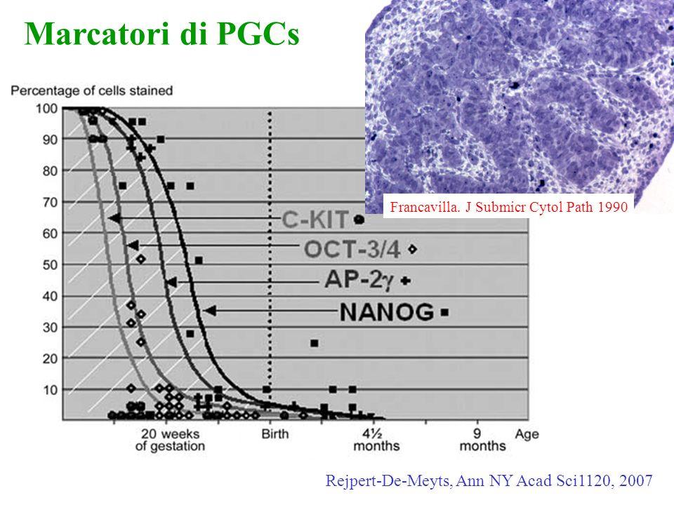 Rejpert-De-Meyts, Ann NY Acad Sci1120, 2007 Marcatori di PGCs Francavilla. J Submicr Cytol Path 1990
