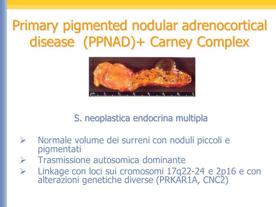 S. neoplastica endocrina multipla Normale volume dei surreni con noduli piccoli e pigmentati Trasmissione autosomica dominante Linkage con loci sui cr