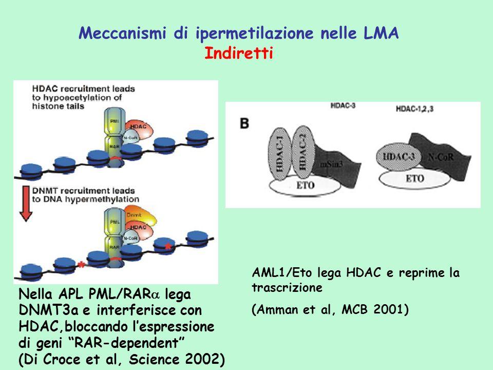 Nella APL PML/RAR lega DNMT3a e interferisce con HDAC,bloccando lespressione di geni RAR-dependent (Di Croce et al, Science 2002) Meccanismi di iperme