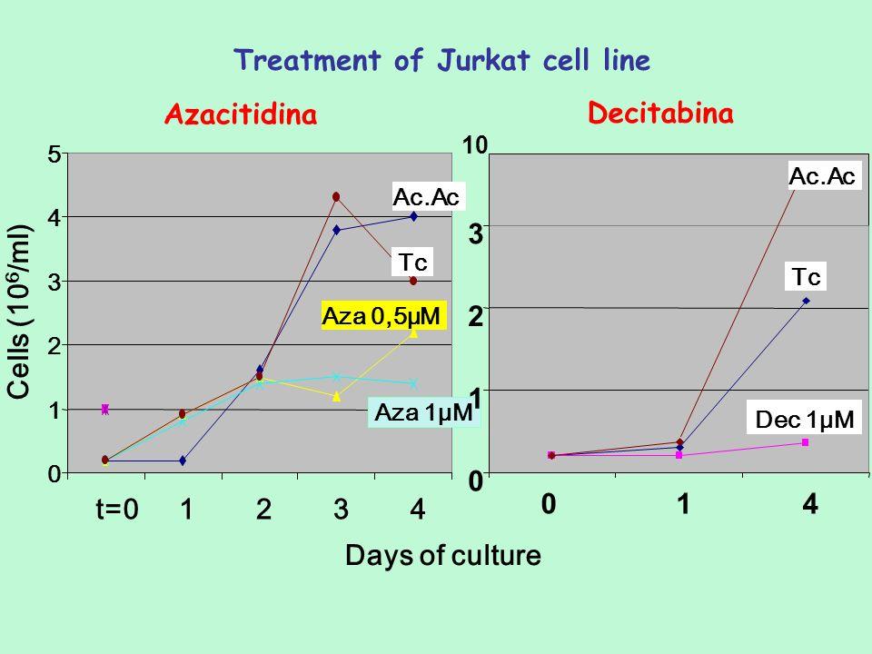 0 1 2 3 4 5 t=01234 Tc Aza 0,5μM Aza 1μM Days of culture Treatment of Jurkat cell line Cells (10 6 /ml) Azacitidina Decitabina 10 Ac.Ac 0 1 2 3 0 1 4