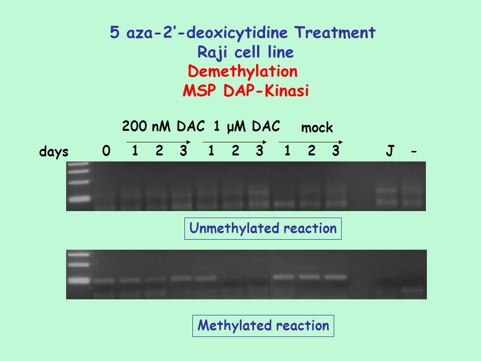 5 aza-2-deoxicytidine Treatment Raji cell line Demethylation MSP DAP-Kinasi 0123123123J- 200 nM DAC1 μM DAC mock days Unmethylated reaction Methylated