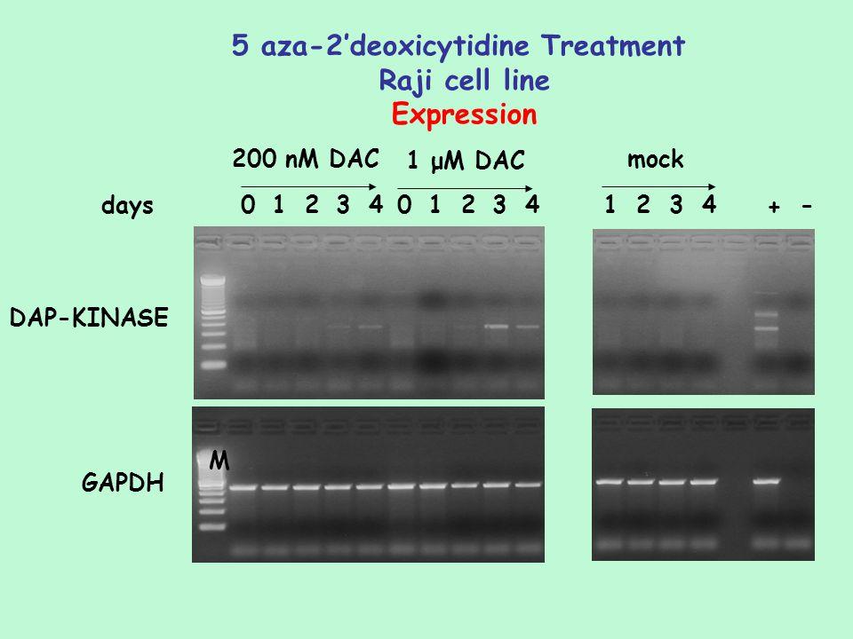 DAP-KINASE 5 aza-2deoxicytidine Treatment Raji cell line Expression GAPDH M 01234012341234 + -days 200 nM DAC 1 μM DAC mock