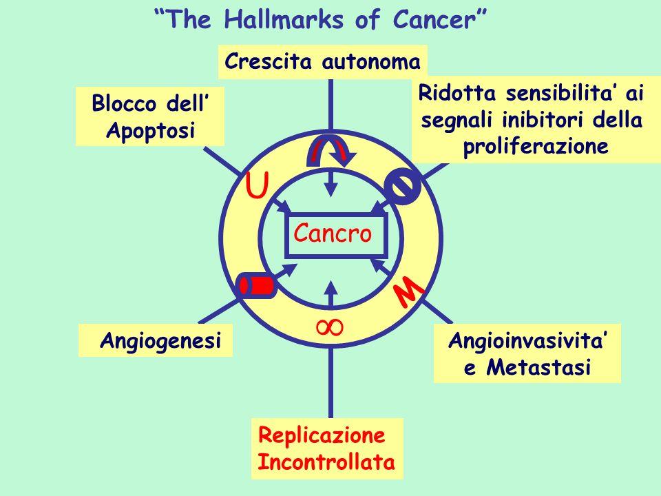 Crescita autonoma The Hallmarks of Cancer Blocco dell Apoptosi Ridotta sensibilita ai segnali inibitori della proliferazione Angiogenesi Replicazione