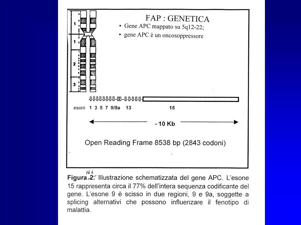CLASSIFICAZIONE FAP Forma classica > 100 polipi, insorgenza 25-35 anni Forma attenuata < 100 polipi, insorgenza tardiva Forma severa > 1000 polipi, in