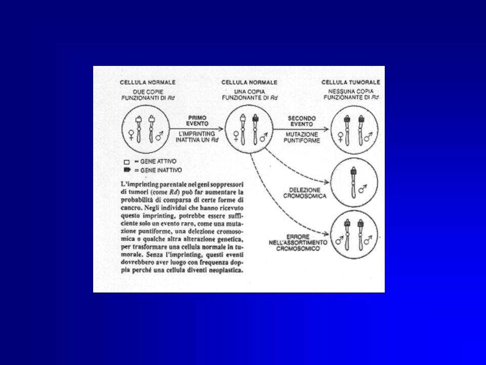 Eleggibilità al test per la HNPCC Presenza in famiglia di tre casi di HNPCC parentela di I° grado tra i pazienti affetti presenza della malattia in due generazioni insorgenza della malattia in almeno uno degli affetti entro i 50 anni assenza di polipi documentazione istologica delle neoplasie