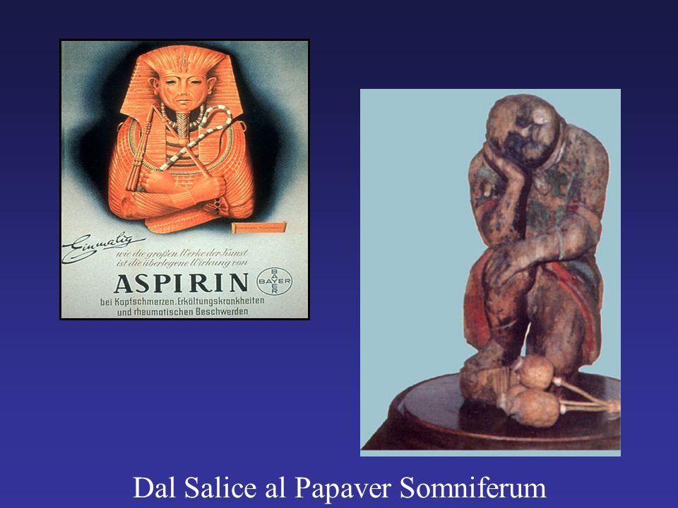 Dal Salice al Papaver Somniferum