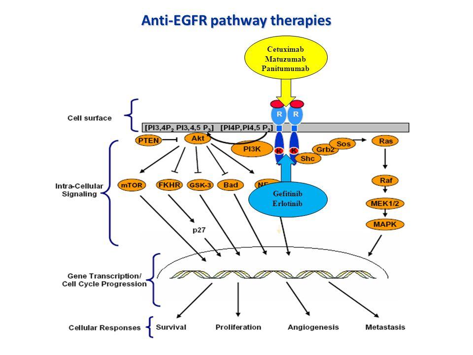 Anti-EGFR pathway therapies Cetuximab Matuzumab Panitumumab Gefitinib Erlotinib
