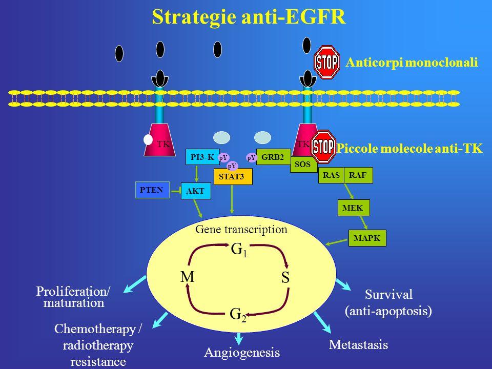 TK Survival (anti-apoptosis) PI3-K STAT3 AKT PTEN MEK Gene transcription MAPK Proliferation/ maturation Chemotherapy / radiotherapy resistance Angiogenesis Metastasis pY RASRAF SOS GRB2 pY G1G1 S M G2G2 Anticorpi monoclonali Piccole molecole anti-TK Strategie anti-EGFR