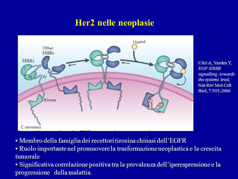 Citri A, Yarden Y, EGF-ERBB signalling: towards the systems level, Nat Rev Mol Cell Biol, 7:505,2006 Her2 nelle neoplasie Membro della famiglia dei recettori tirosina chinasi dellEGFR Ruolo importante nel promuovere la trasformazione neoplastica e la crescita tumorale Significativa correlazione positiva tra la prevalenza delliperespressione e la progressione della malattia.