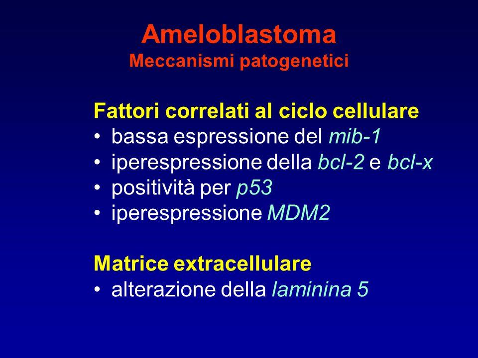 Ameloblastoma Meccanismi patogenetici Fattori correlati al ciclo cellulare bassa espressione del mib-1 iperespressione della bcl-2 e bcl-x positività