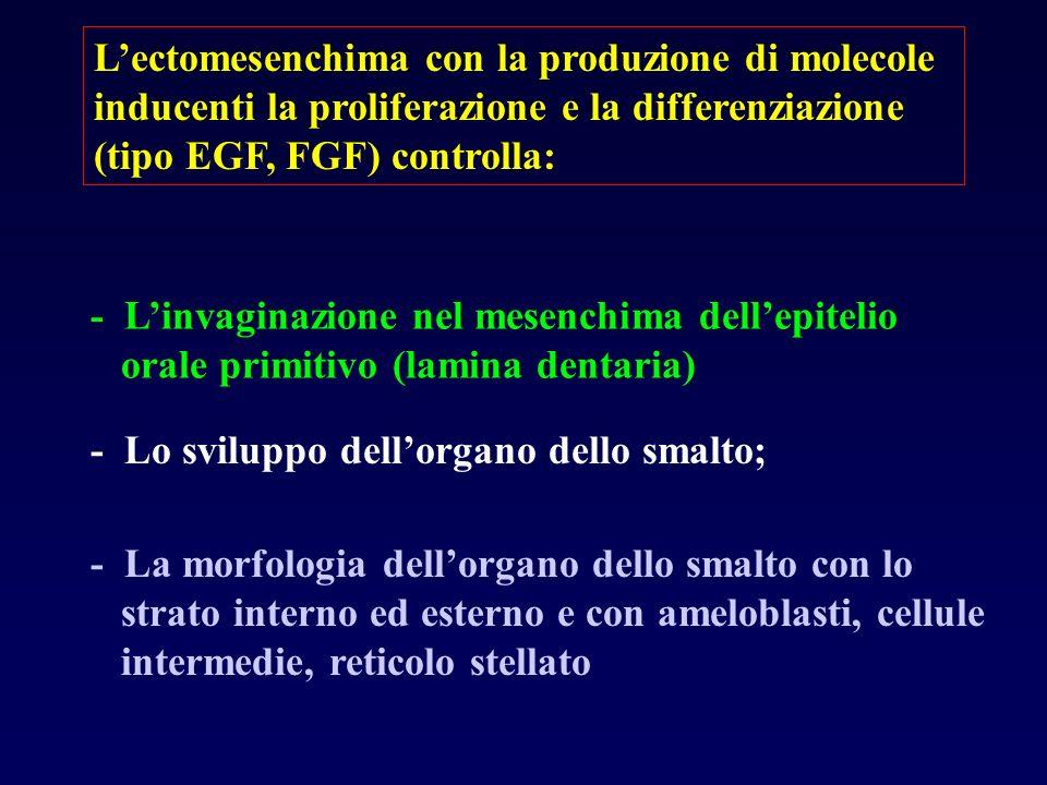 Lectomesenchima con la produzione di molecole inducenti la proliferazione e la differenziazione (tipo EGF, FGF) controlla: - Linvaginazione nel mesenc