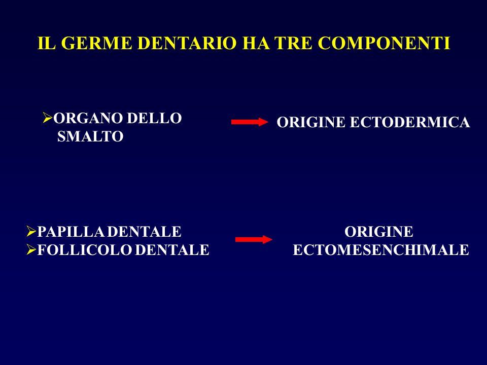 IL GERME DENTARIO HA TRE COMPONENTI ORGANO DELLO SMALTO ORIGINE ECTODERMICA PAPILLA DENTALE FOLLICOLO DENTALE ORIGINE ECTOMESENCHIMALE