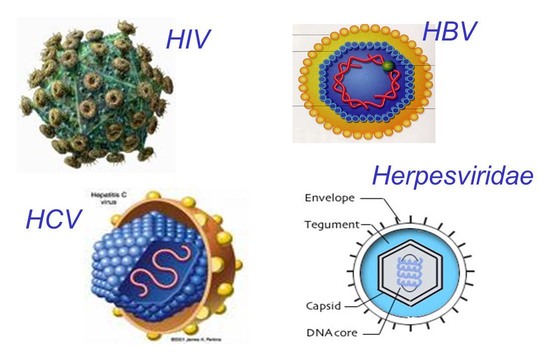 HIV HBV HCV Herpesviridae