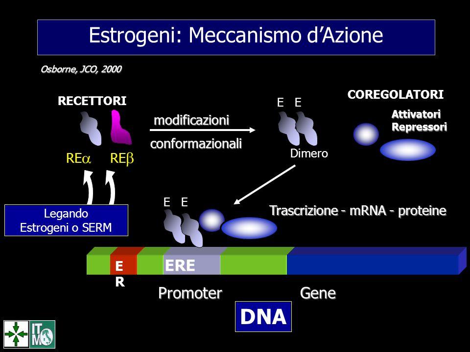 Estrogeni: Meccanismo dAzione Trascrizione - mRNA - proteine ERER ERE Promoter Gene E COREGOLATORIAttivatoriRepressori modificazioni conformazionali D