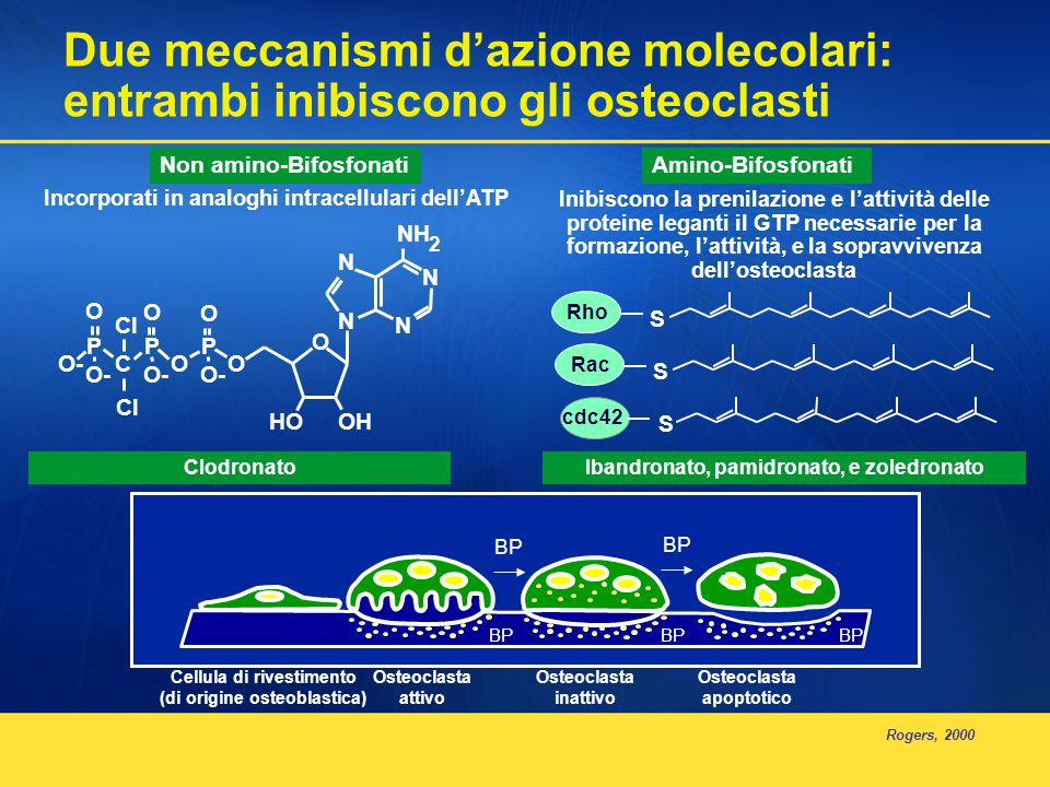 Acido zoledronico presenta lo stesso profilo di sicurezza renale di pamidronato Pazienti senza aumento dei livelli di creatinina sierica (%) Tempo dallinizio del trattamento (giorni) Acido zoledronico 4 mg 272 Pamidronato 268 120 360480600720 240 *