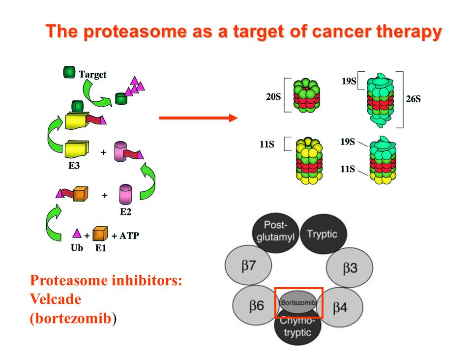 Proteasome inhibitors: Velcade (bortezomib) The proteasome as a target of cancer therapy