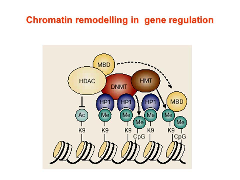 Chromatin remodelling in gene regulation