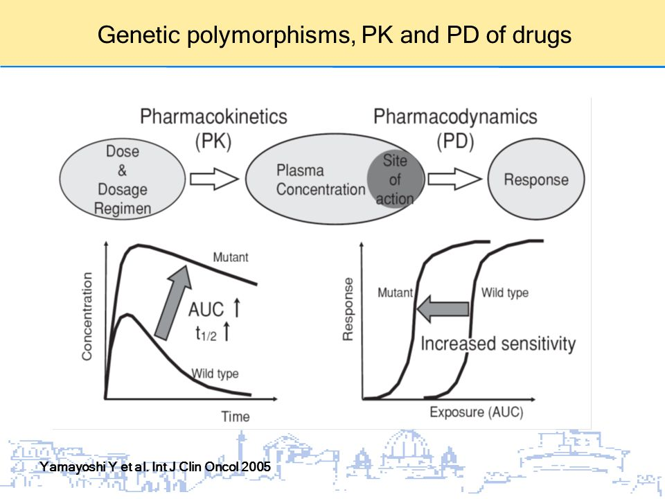 Genetic polymorphisms, PK and PD of drugs Yamayoshi Y et al. Int J Clin Oncol 2005