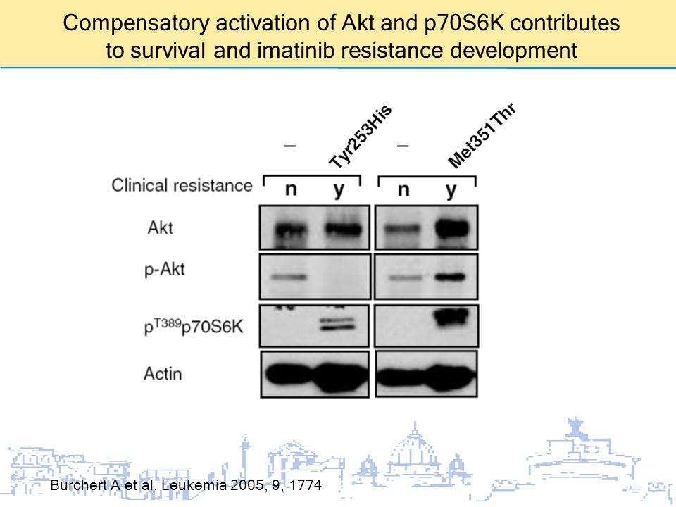 Burchert A et al, Leukemia 2005, 9, 1774 Compensatory activation of Akt and p70S6K contributes to survival and imatinib resistance development