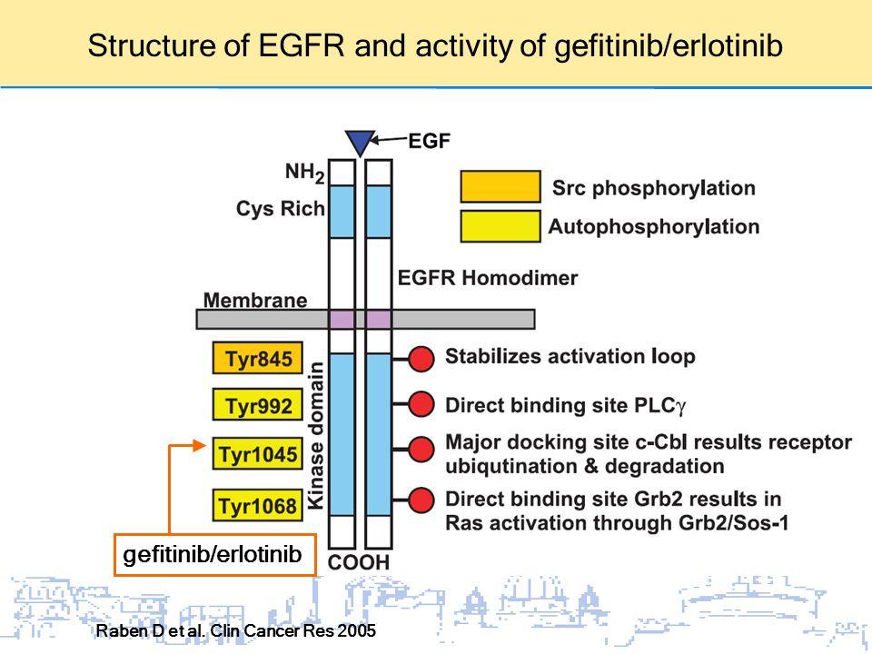 Structure of EGFR and activity of gefitinib/erlotinib Raben D et al. Clin Cancer Res 2005 gefitinib/erlotinib
