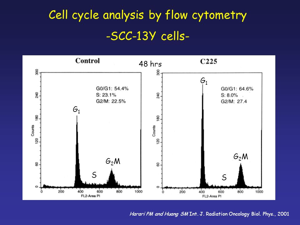 Cell cycle analysis by flow cytometry -SCC-13Y cells- 48 hrs G2MG2M G2MG2M G1G1 S G1G1 S Harari PM and Huang SM Int. J. Radiation Oncology Biol. Phys.