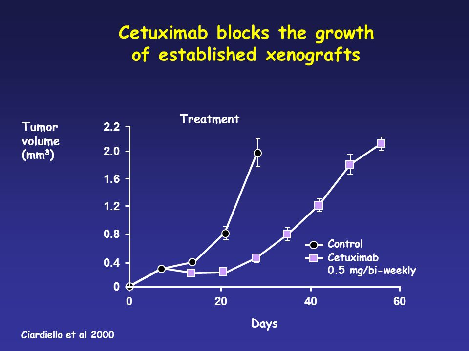 Cetuximab blocks the growth of established xenografts 0.4 0.8 1.2 2.0 Treatment Tumor volume (mm 3 ) 2.2 1.6 0 Control Cetuximab 0.5 mg/bi-weekly Days