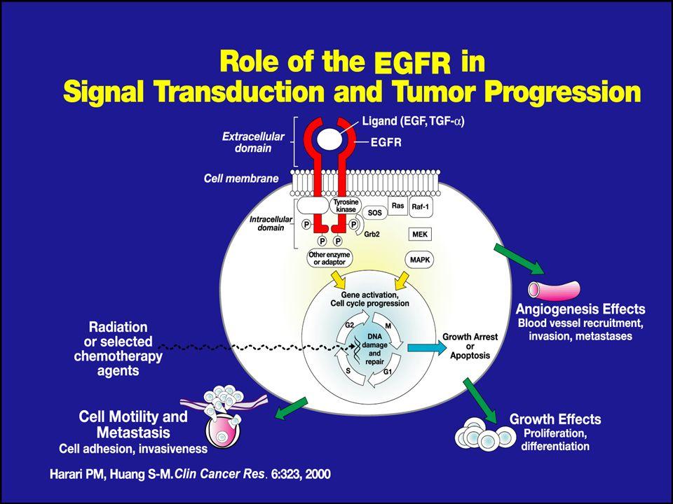 Espressione dellEGFR nei tumori umani TumoreEspressionePrognosiRischio di metastasi Colon-retto25-77%avversaaumentato Testa-collo95-100% DFS, OAS Pancreas30-89% OAS NSCLC40-80% OASaumentato Rene50-90% Vescica30-48% Ovaio35-70%