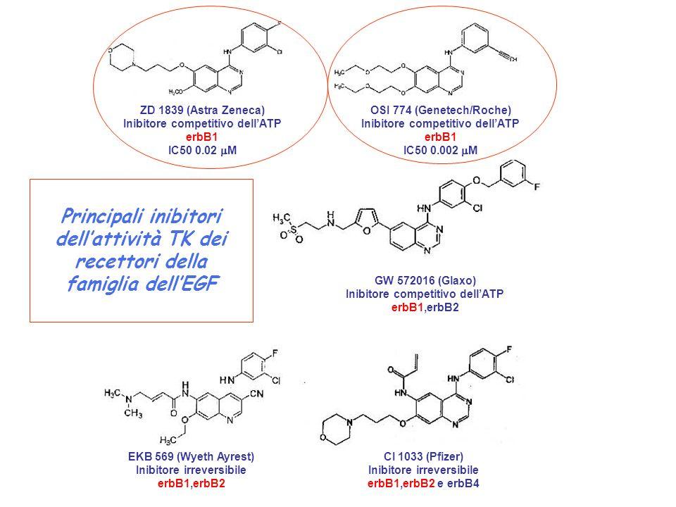 Materiale incluso in paraffina sezioni rappresentative IHCFISHMicrodissezione Estrazione DNA Mutazioni EGFR, HER2, Ki- RAS qPCR-EGFR, polimorfismo introni EGFR EGFR, HER2 Stratificazione x n.copie EGFR, HER2m pMAPK, pAKT, KI-67, …..