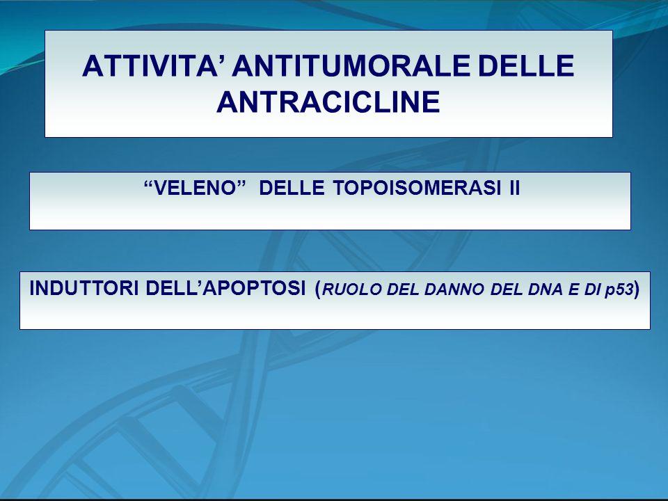 ATTIVITA ANTITUMORALE DELLE ANTRACICLINE VELENO DELLE TOPOISOMERASI II INDUTTORI DELLAPOPTOSI ( RUOLO DEL DANNO DEL DNA E DI p53 )