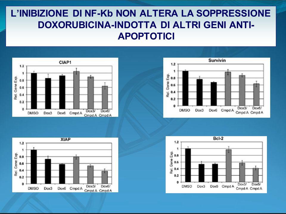 LINIBIZIONE DI NF-Kb NON ALTERA LA SOPPRESSIONE DOXORUBICINA-INDOTTA DI ALTRI GENI ANTI- APOPTOTICI