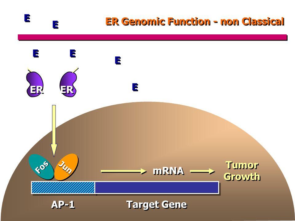 ER Genomic Function - non Classical ER E E E E E E E E E E E E Tumor Growth Tumor Growth mRNA Target Gene AP-1 FosFos JunJun