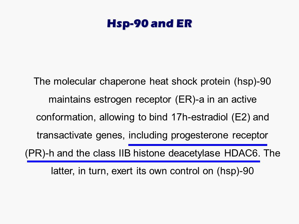 The molecular chaperone heat shock protein (hsp)-90 maintains estrogen receptor (ER)-a in an active conformation, allowing to bind 17h-estradiol (E2)
