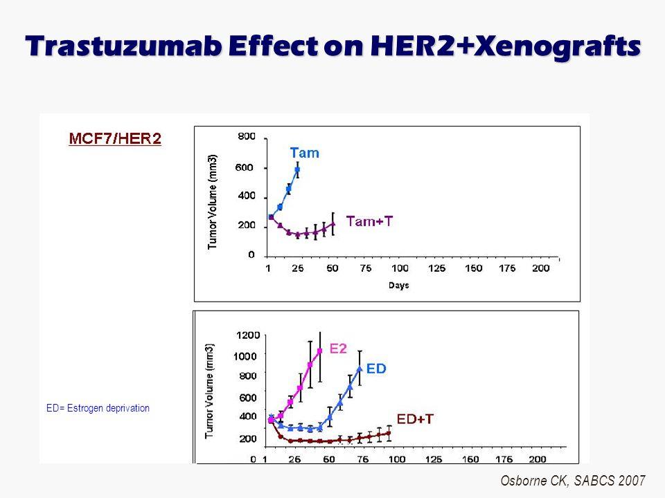 Trastuzumab Effect on HER2+Xenografts ED= Estrogen deprivation Osborne CK, SABCS 2007